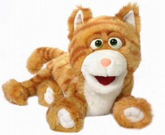חתול ג'ינגיני מצחיק 0810
