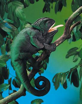 זיקית 2215  chameleon puppet folkmanis