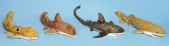 כרישי שונית