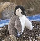 פינגווין מלכותי - תינוק 2178