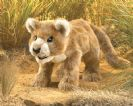 FOLKMANIS גור אריה -כפיר 3064