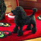 FOLKMANIS כלב פודל שחור 3095