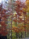 סתיו בגינה עיצוב גינה עם צבעי שלכת
