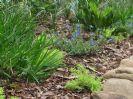 חיפוי קרקע בגינה - פתרון יפה לחסכון במים