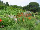 גן קוטג' אנגלי
