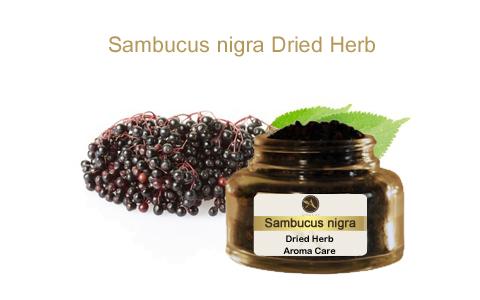 צמח מרפא סמבוק שחור פירות