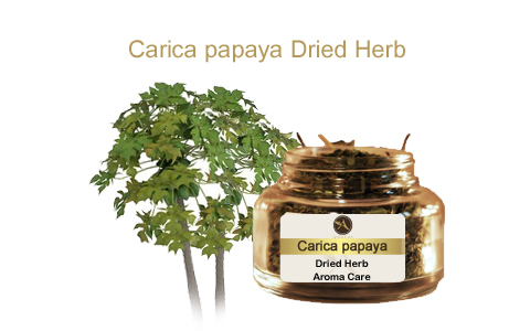 צמח מרפא פאפאיה אורגני