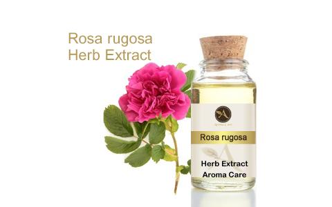 מיצוי מצמח מרפא פקעות ורדים