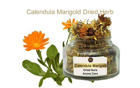 צמח מרפא פרחי קלנדולה