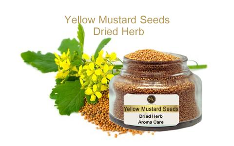 צמח מרפא חרדל צהוב