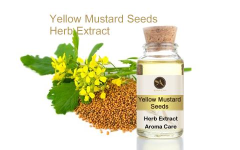 מיצוי מצמח מרפא חרדל צהוב