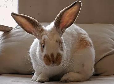 ארנבון טיפול בעזרת בעלי חיים