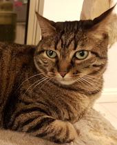ענת קציר אליאל - טיפול בעזרת בעלי חיים