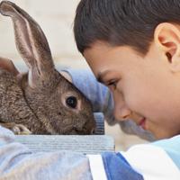 לימודי טיפול בעזרת בעלי חיים, לימודים מטפלים בעזרת