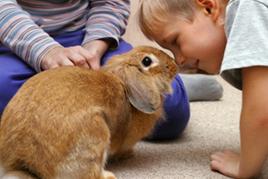 ילדים משחקים עם ארנב טיפול באנשים בעזרת בעלי חיים