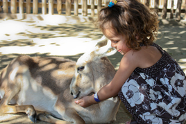 ילדה מלטפת גדי- טיפול בעזרת חיות