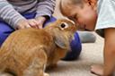 משחקים עם ארנבון - טיפול עם בעלי חיים