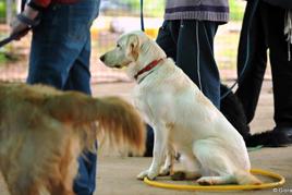 טיפול בילדים נפגעי אלימות והוריהם - כלב יושב