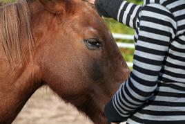 מהו טיפול ברכיבה על סוסים ילדה מלטפת סוס