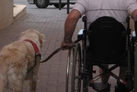 כלב עוזר לנכה על כיסא גלגלים כלבי עזר ושירות