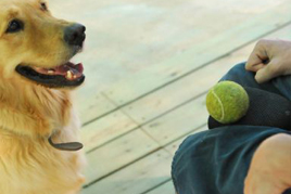 סיוע ללילדים עם קשיים חברתיים ילד וכלב משחקים
