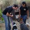 מאלפים כלבים - אילוף כלבים ותרפיה