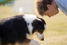 פתרונות אילוף ובעיות התנהגות של כלבים איש מאלף כלב