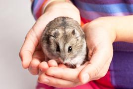 אוגר סיבירי - תרפיה בעזרת בעלי חיים