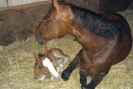 תרפיה עם סוסים סוסה וסייח