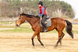 שמירה על הגב בזמן רכיבה ילדה רוכבת על סוס