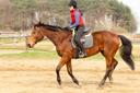 שמירה על הגב בזמן רכיבה טיפולית ילדה רוכבת על סוס