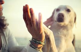 טיפול משפחתי בעזרת כלבים סמינר הקיבוצים
