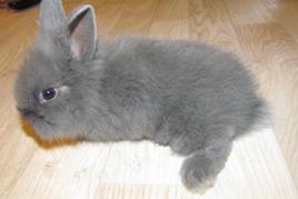 ללטף שפן ארנבת ארנבון תרפיה באמצעות בעלי חיים