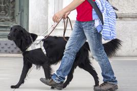 כלב שירות עיוור הולך עם כלב נחייה