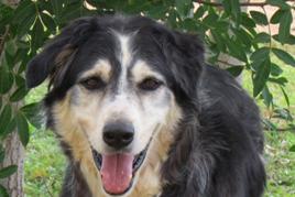 כלב טיפולי