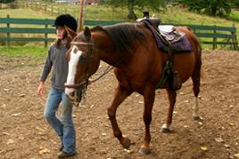 רכיבה טיפולית ילדה וסוס