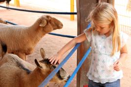 טיפול בעזרת בעלי חיים פינת ליטוף