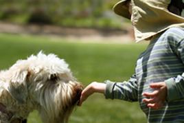 כלב מלקק ילד - בניית תכנית טיפול בעזרת בעלי חיים