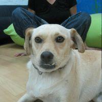 כלב חיה טיפולית