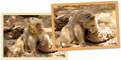משחק זיכרון אריה