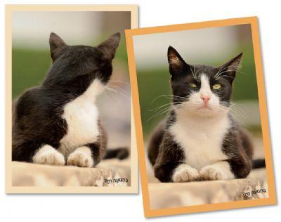 משחק זיכרון חתול