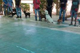 מאלפי כלבים