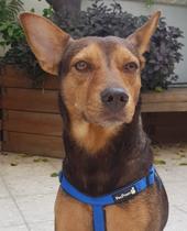 ענת קציר אליאל - טיפול בעזרת כלבים