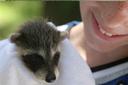 ילד מחזיק בעל חיים ומחייך