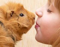 טיפול בעזרת בעלי חיים - ילד מחזיק שרקן