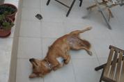 כלב כלבנות טיפולית