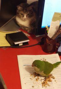 חתול ותוכי טיפול באמצעות בעלי חיים