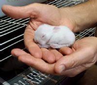 חן החיות - חן ירקוני מטפלת בעזרת בעלי חיים