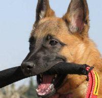 סמינר כלבי עזר / שירות כלב