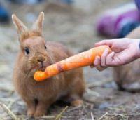 טיפול בעזרת בעלי חיים - ילד מאכיל ארנבון בגזר